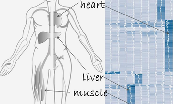 Out Today: The First Catalog Of All The Proteins In The Human Body