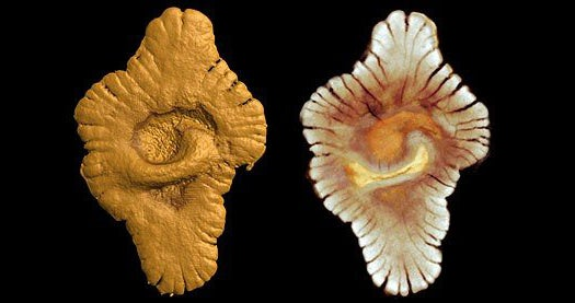 Complex Life Evolved One and a Half Billion Years Earlier Than Previously Thought, New Fossils Show