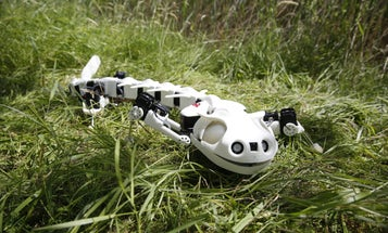 Watch This Salamander Robot Slither Like The Real Thing