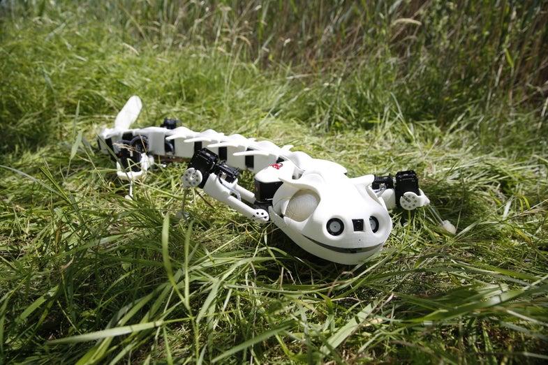 Robot Salamander