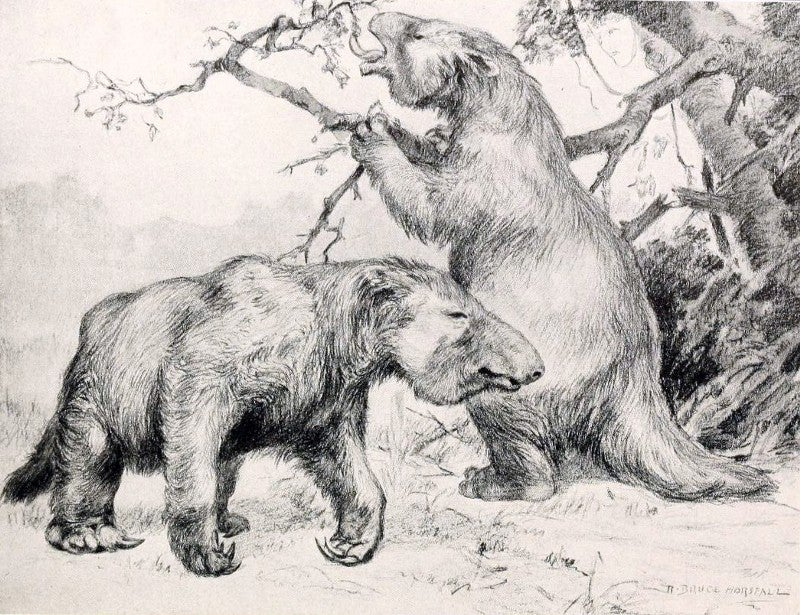 Giant sloths