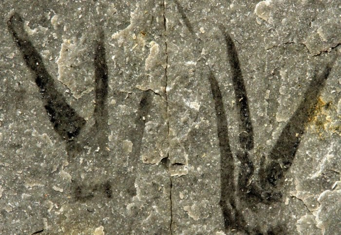 Cambrian Fossil With Scissor-Like Claws Is Named For Johnny Depp
