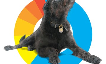 The Top U.S. Dog Breeds [Infographic]
