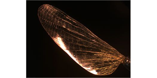 Your Next Suture Could Be Made of Shrilk, a Superstrong Synthetic Insectoid Material