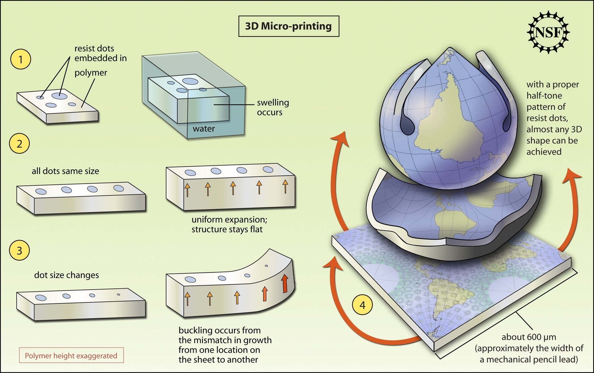 Video: 3-D Curling Method Creates Custom Structures From Flat Plastic Sheets
