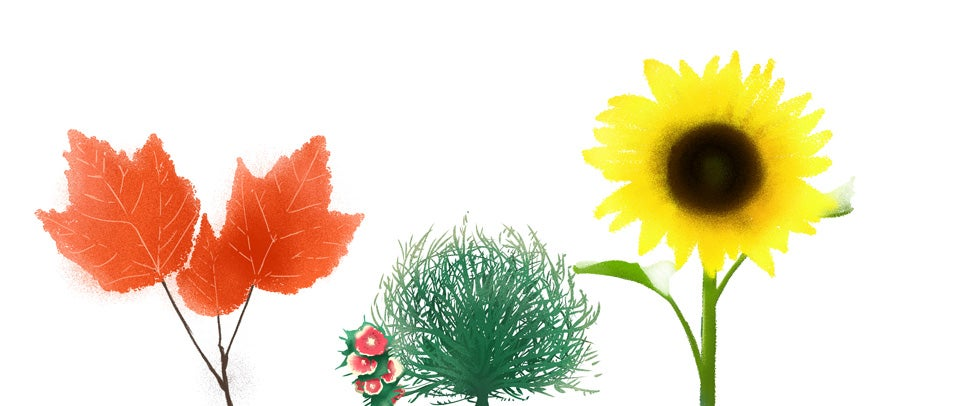 When Plants Get … Radioactive?