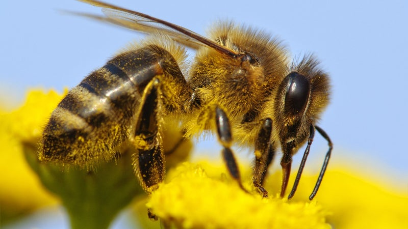 Want to help the bees? Keep these out of your garden.