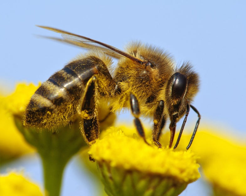 Bee sits on yellow flower.