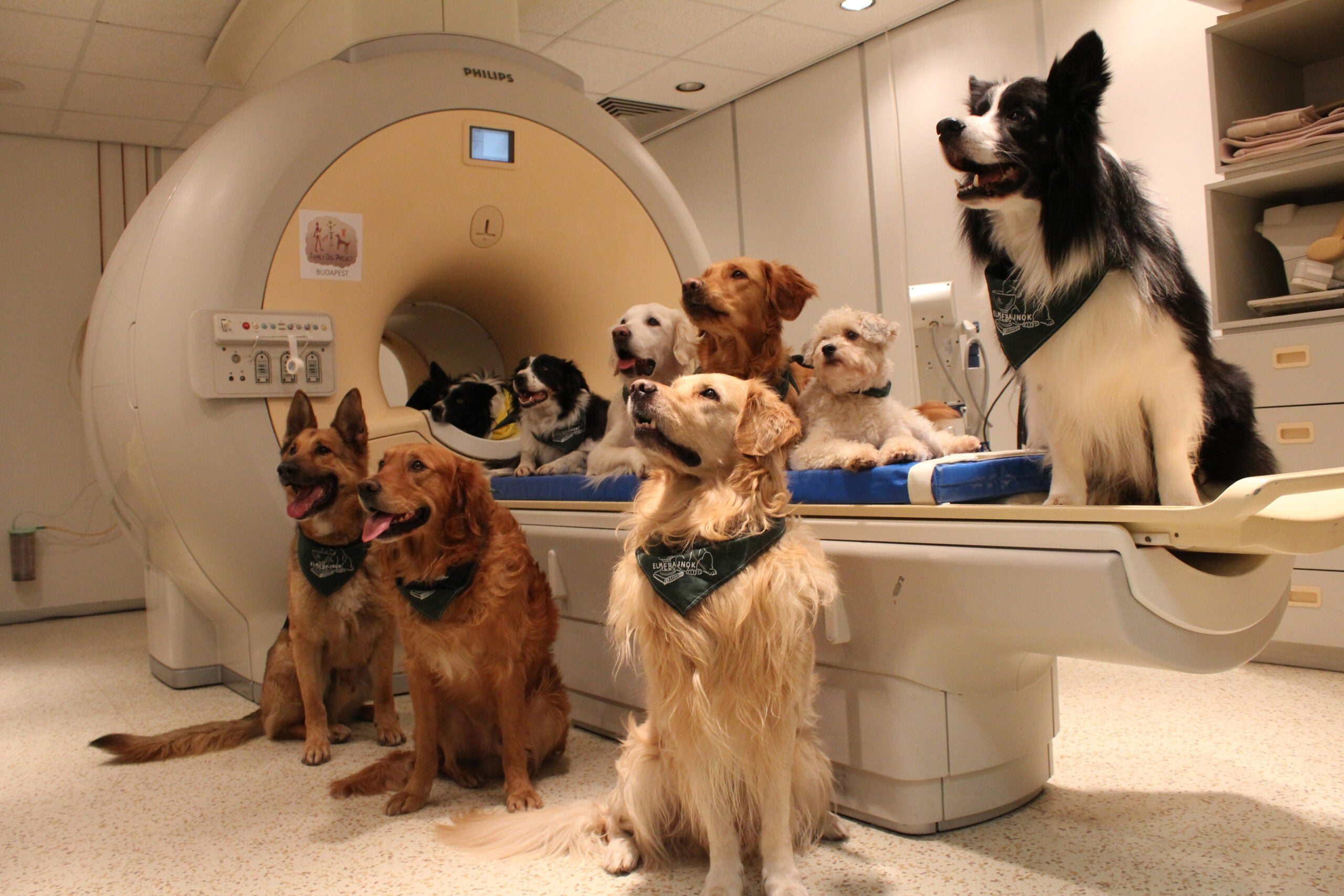 Group of dogs around fMRI