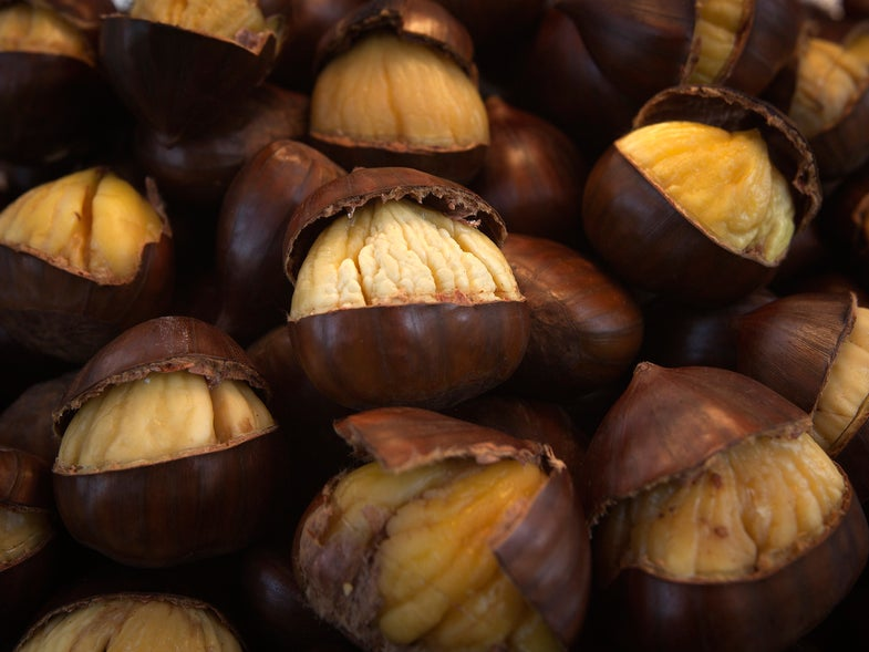 Genetically Modified Chestnuts Roasting On An Open Fire