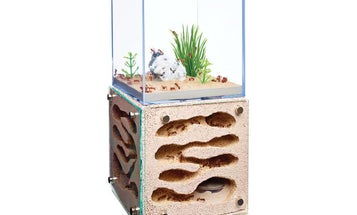 How to pick an ant farm for grown-ups