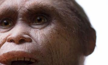 "How Ancient Human-Like ""Hobbits"" Got So Small"