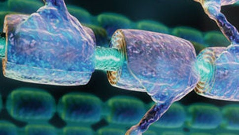 The Essential Guide to Stem Cells