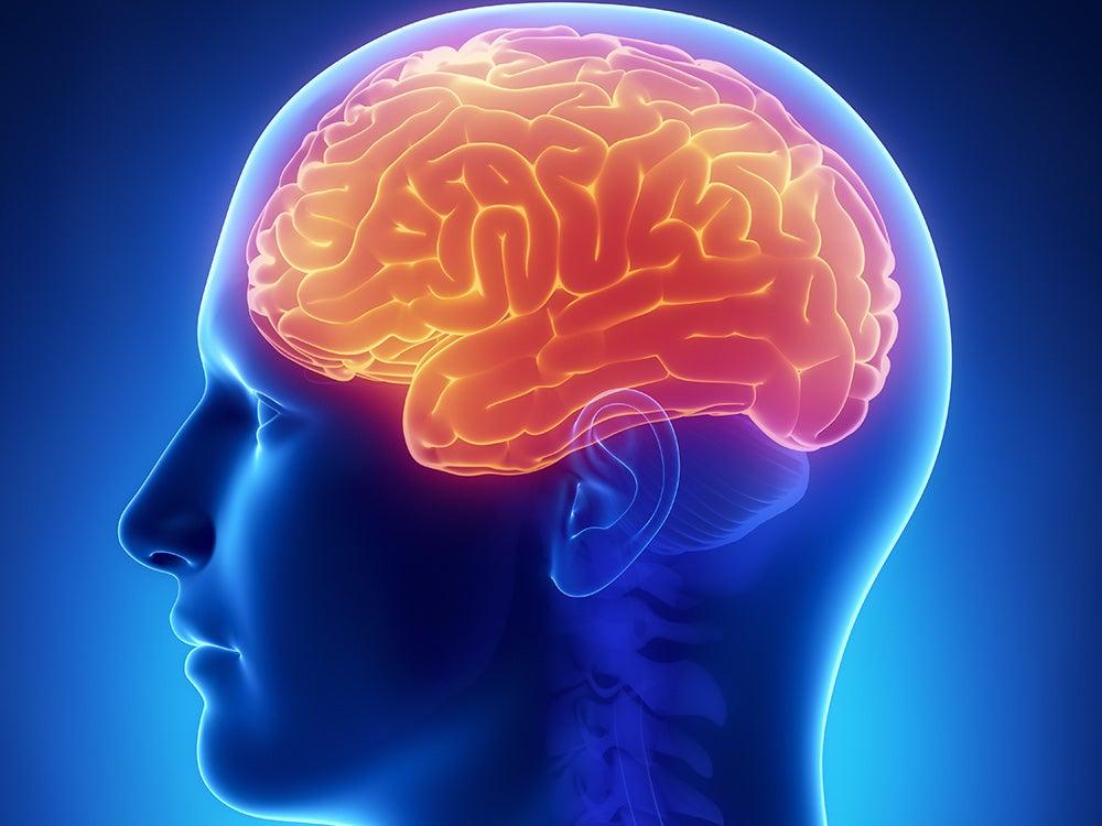 Higher brain functions brain illustration