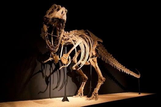 FYI: How Do You Ship A Dinosaur Halfway Around The World?