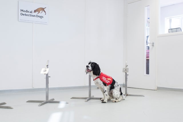 These dogs know you have malaria before you do