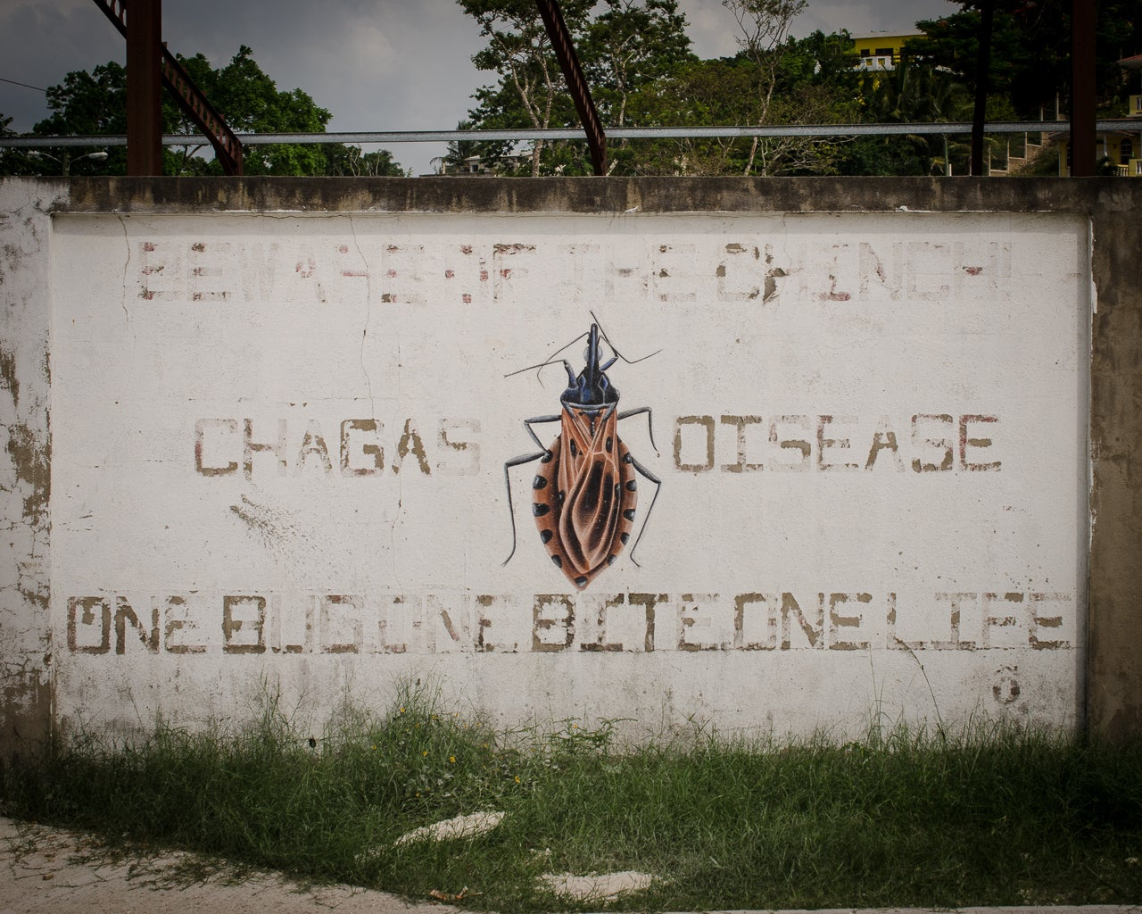 The Month In Plagues: Chagas In The US, Polio Eradication In Nigeria, And More