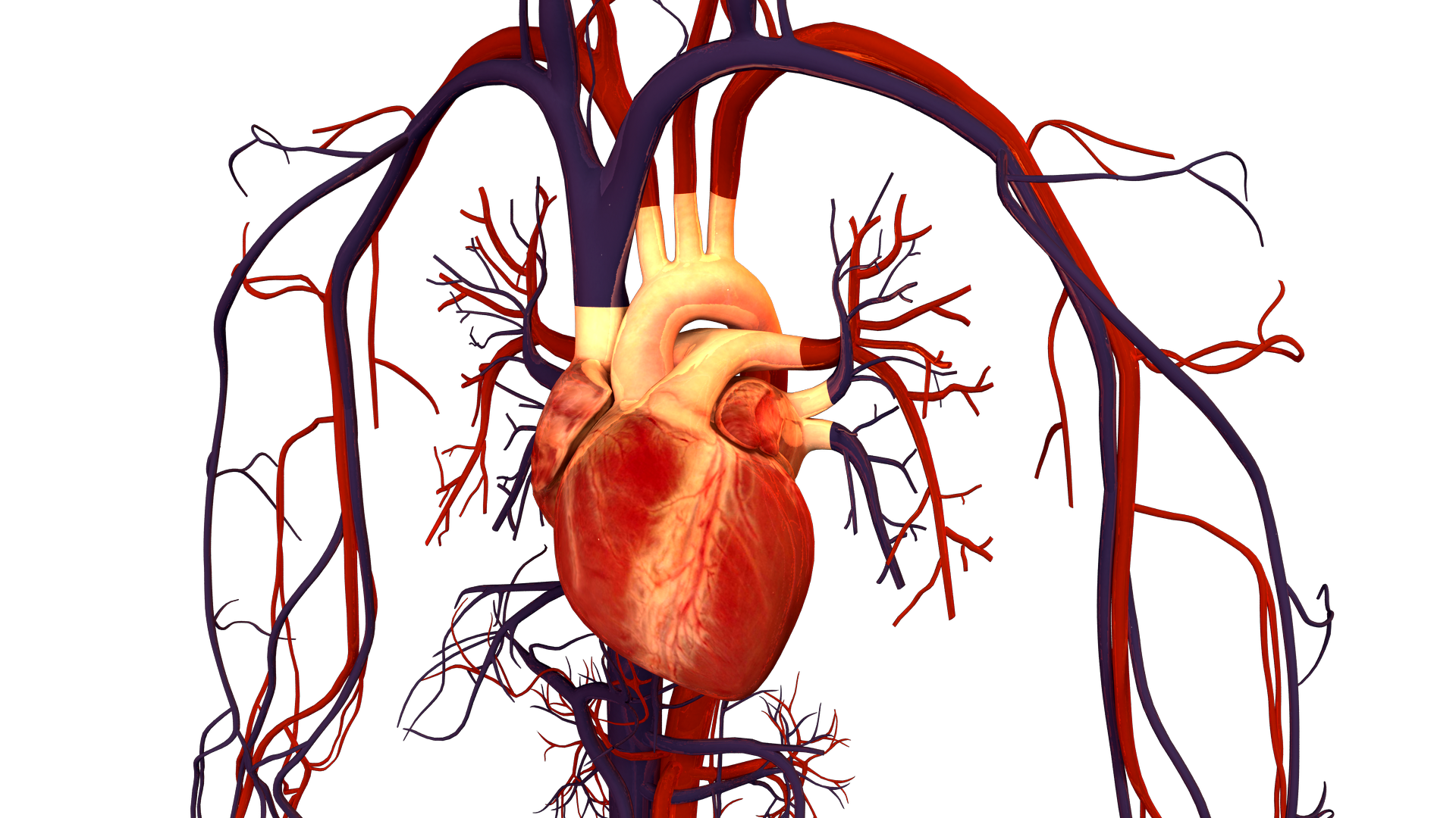 A Genetic Mutation Could Save You From A Heart Attack