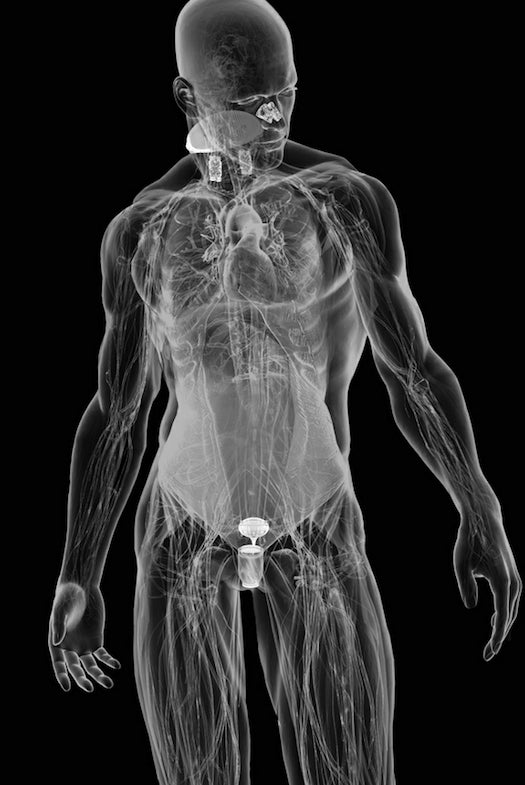 Water Scarce After the Apocalypse? Install These Water-Conserving Cyborg Internal Organs