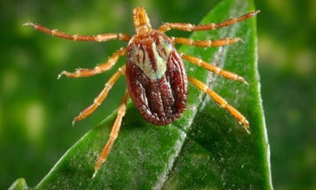 How to avoid ticks and the many diseases they transmit