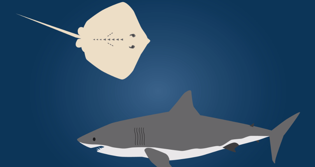 Bizarre Proton-Conducting Jelly Helps Sharks Detect Electrical Signals Of Prey