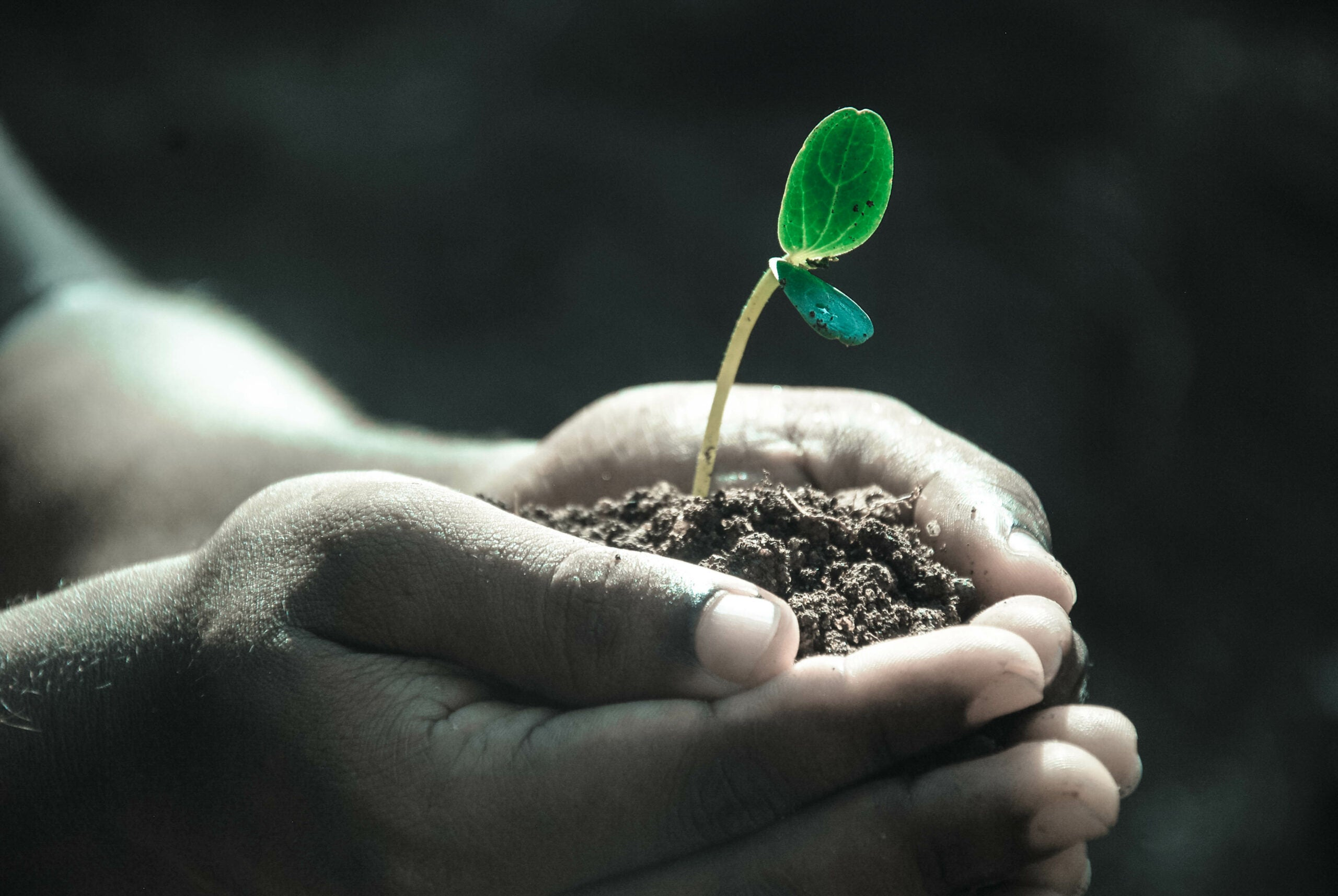 We need to protect the world's soil before it's too late