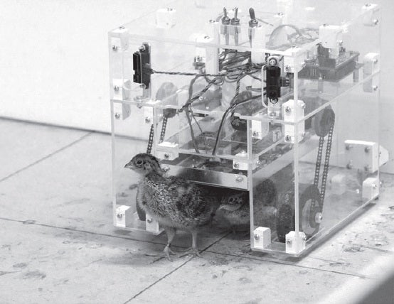 A Heated Robotic Mother Hen Improves Quail Chicks' Spatial Learning Abilities
