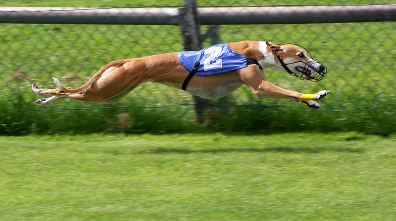 The World's Fastest Dog Vs. The World's Fastest Cat [Video]