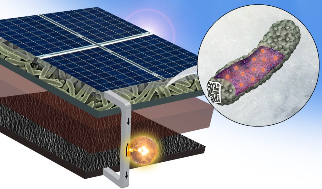 the anode of a solar cell
