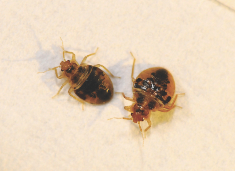 Bed Bugs: Chemical Cover Caveats