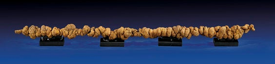 You Can Own The Longest Piece Of Fossilized Feces Ever Sold