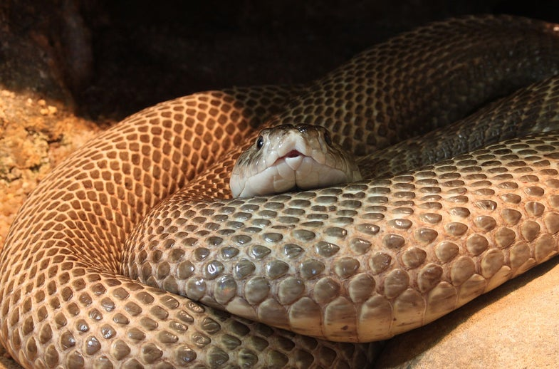 Evolution Didn't Rob Snakes of Their Limbs – Other Animals Gained Them