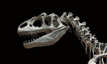 When and how did dinosaurs go extinct?