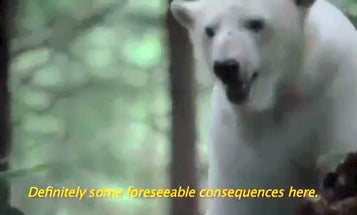 Video: Polar Bear Asks Electric Car Driver To Stop Melting His Home