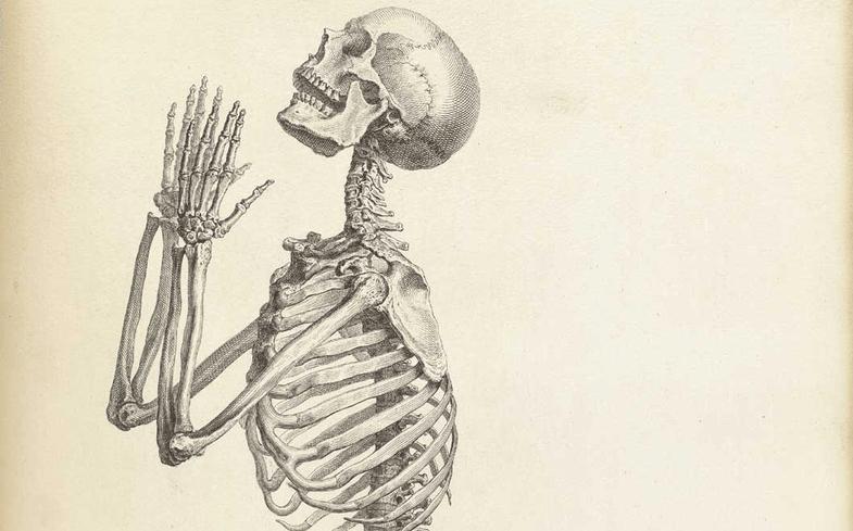 7 Fantastic Vintage Anatomy Drawings