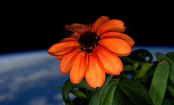 This Flower Just Bloomed In Space