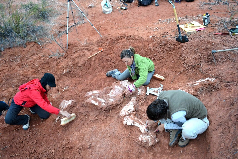 three researchers digging up dinosaur bones