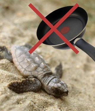 Hit a Turtle With a Frying Pan Lately?