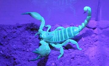 Different Scorpion Species Share Similar Taste In Interior Design
