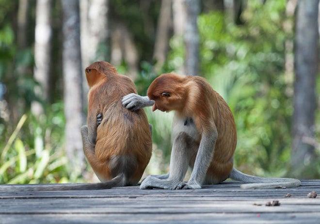 monkeys scratching back