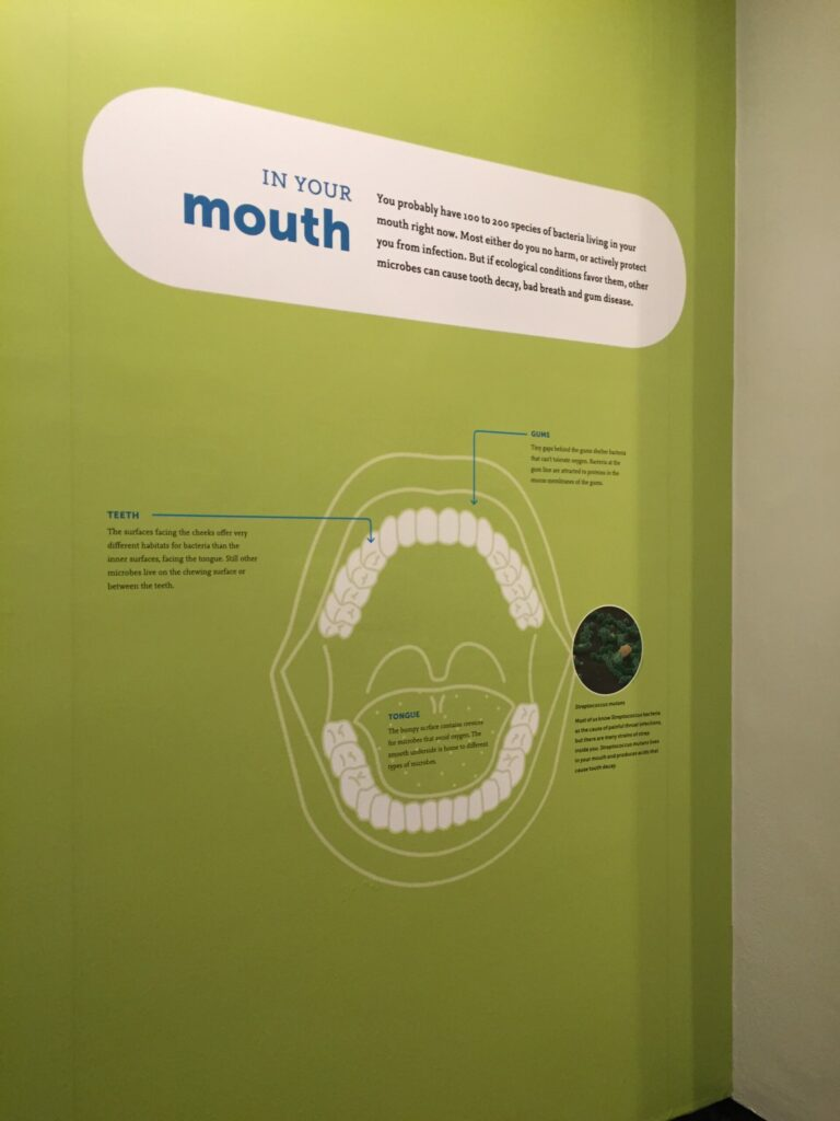 microbiome exhibit at AMNH
