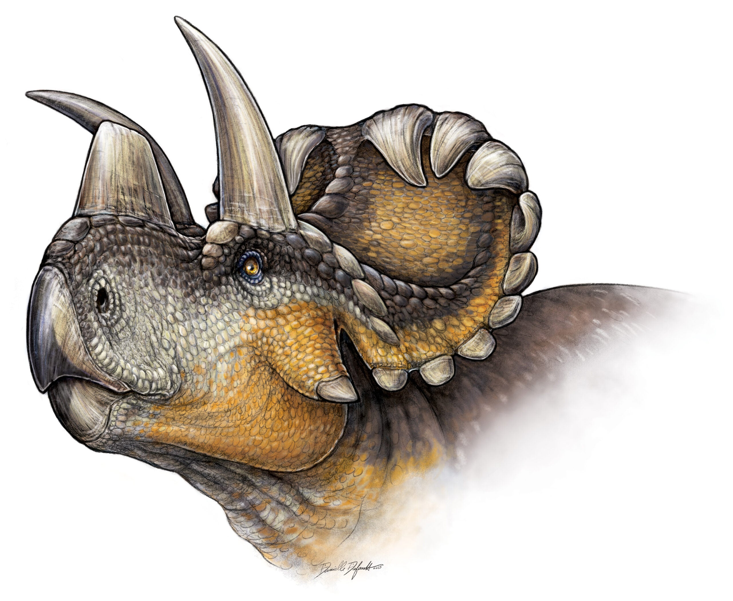 New Triceratops Relative Discovered, Named 'Wendy'