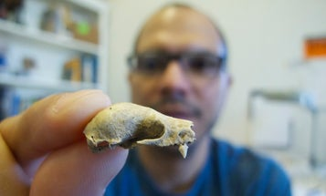 Humans, Not Climate Change, Caused Caribbean Bat Extinctions