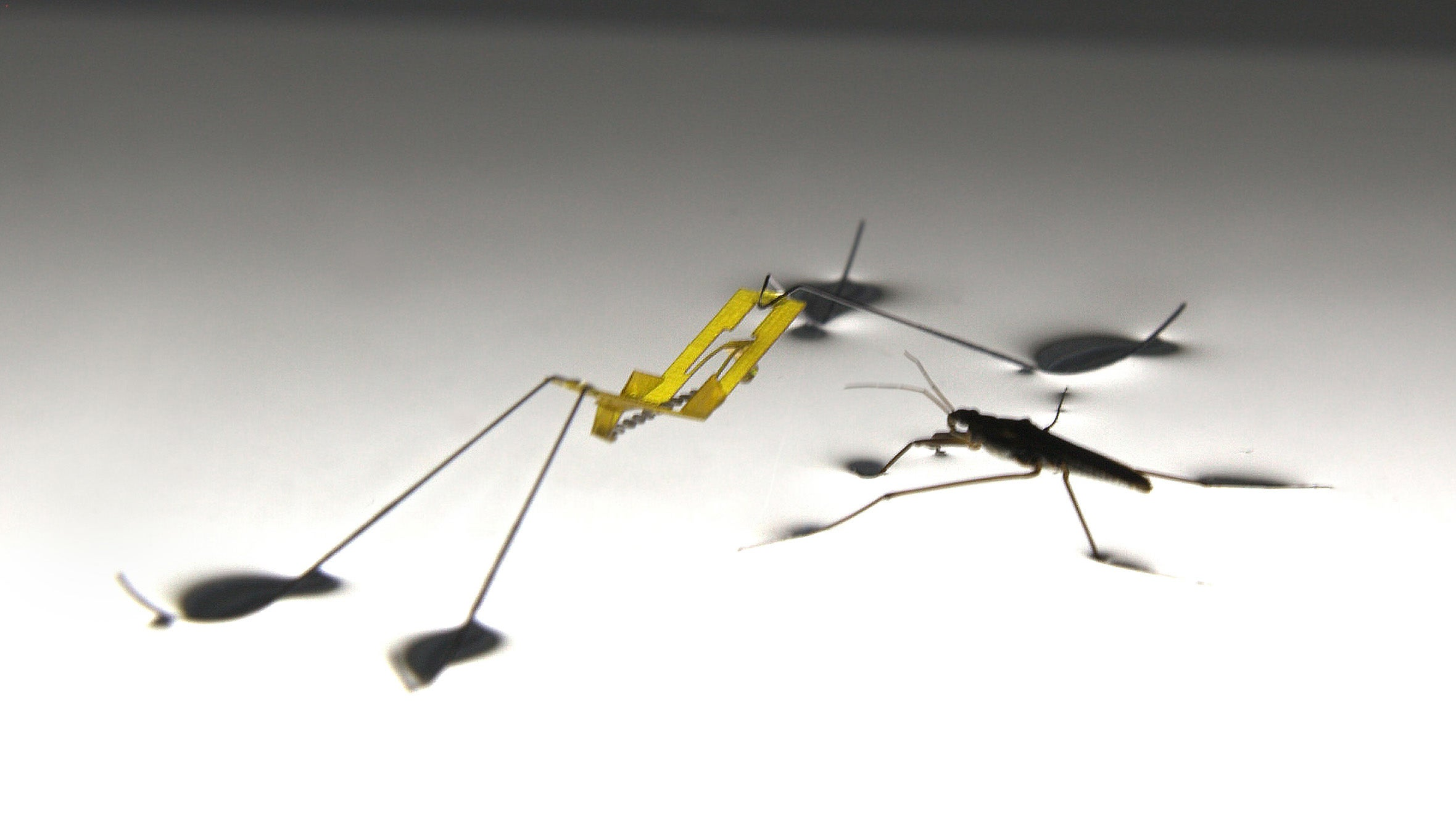 Insect-Like Robot Can Jump On Water