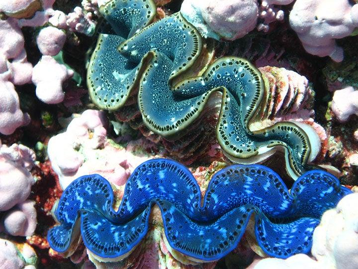 United States, Kingman Reef.