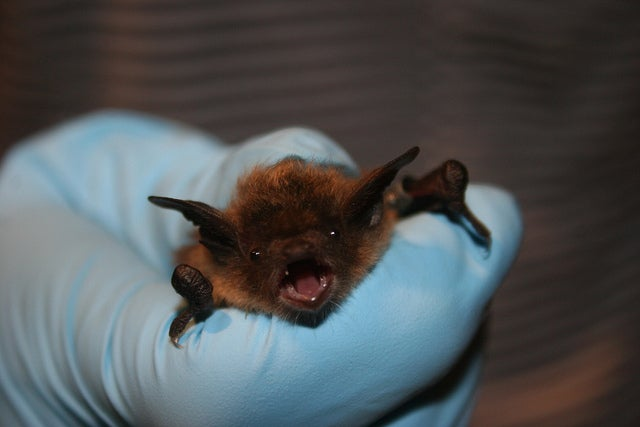 One cave's losing battle against a deadly bat fungus