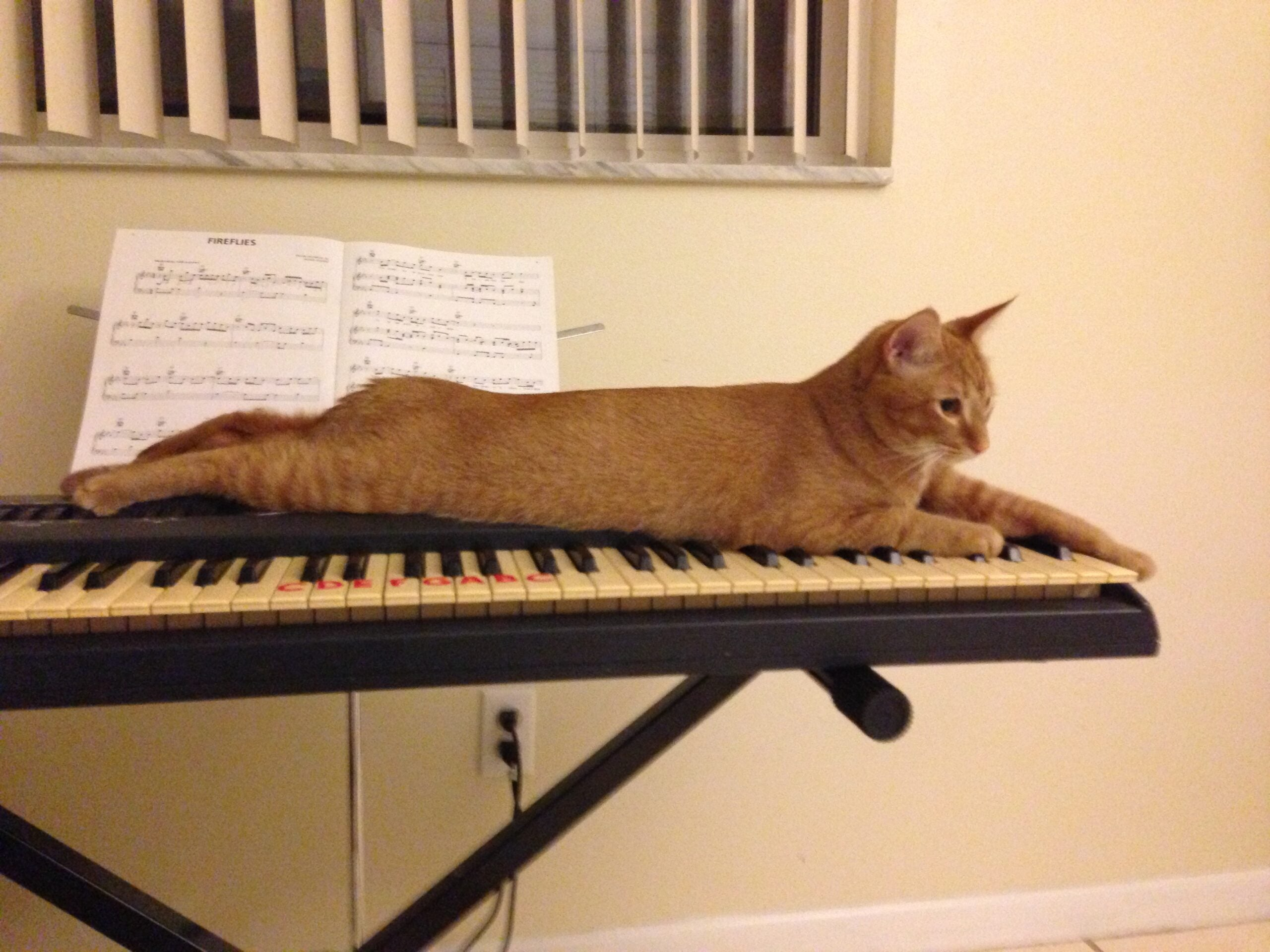 Scientists Have Composed Music Especially For Cats