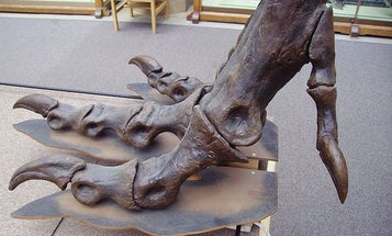 FYI: Did Cavemen Get Athlete's Foot?