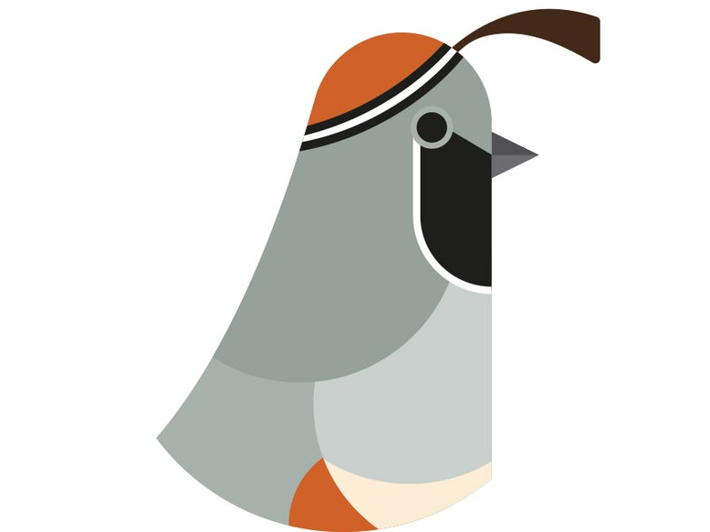 A Birder's Guide To The Future [Infographic]