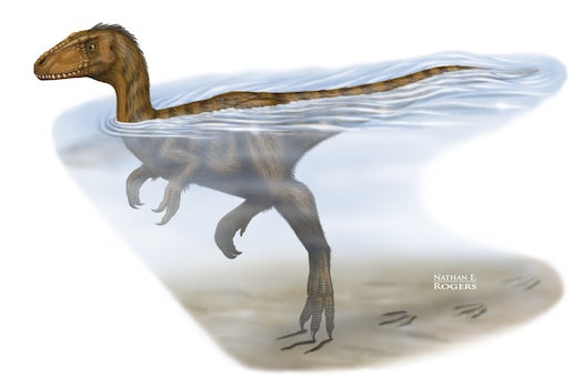 Dinosaurs Could Doggy Paddle Long Distances